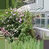 centra ogrodnicze